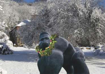 Silverback in the Snow